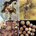 Rzekome pęcherzyki jajnikowe kredowych ptaków okazują się być nasionami roślin