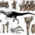 W roku 2019 naukowcy opisali 48 nowych dinozaurów.