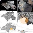 Wspaniale zachowany okaz ankylozaura z Kanady umożliwia rekonstrukcję diety tych dinozaurów