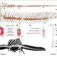 Nowe odkrycia z Maroko odświeżają wizerunek spinozaura.